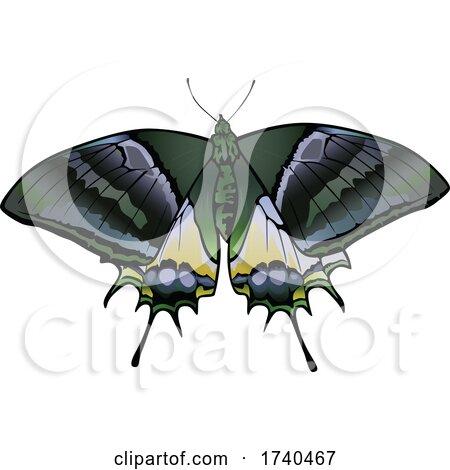 Teinopalpus Aureus Butterfly by dero