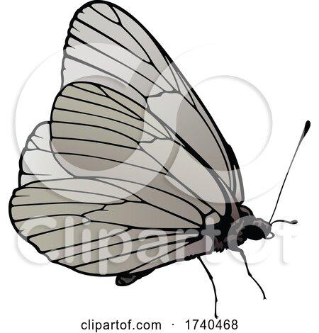 Aporia Crataegi Butterfly by dero