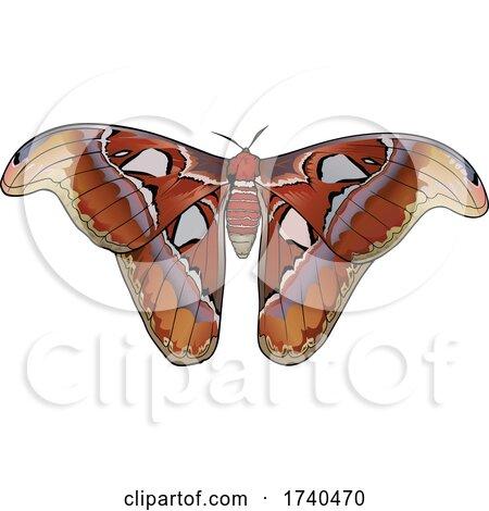 Attacus Atlas Moth by dero