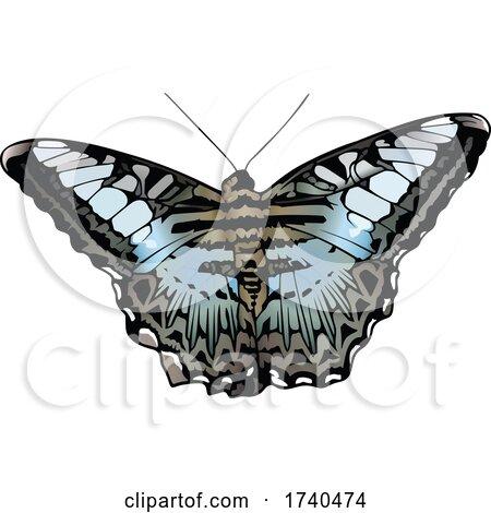 Clipper Butterfly by dero