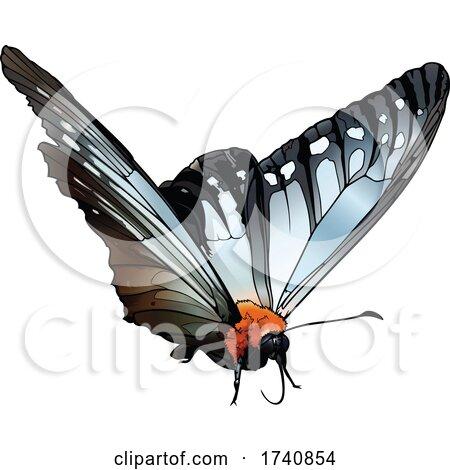 Calinaga Buddha the Freak Butterfly by dero