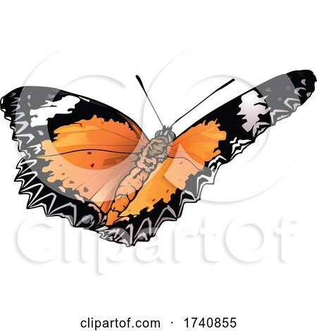 Cethosia Biblis Red Lacewing Butterfly by dero