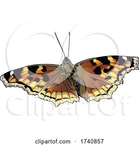 Nymphalis Vaualbum False Comma Compton Tortoiseshell Butterfly by dero