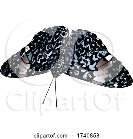Hamadryas Amphinome Cracker Butterfly by dero