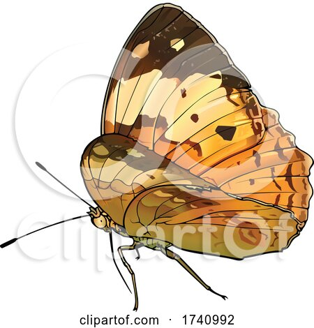 Cupha Erymanthis the Rustic Brush Footed Butterfly by dero