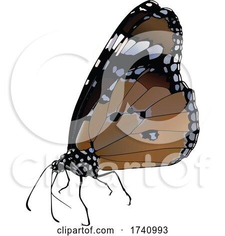 Danaus Chrysippus African Queen Butterfly by dero