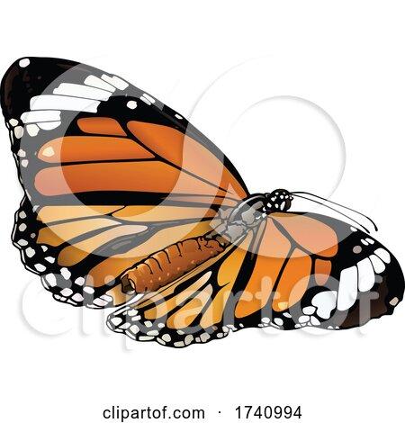 Danaus Genutia Common Tiger Butterfly by dero