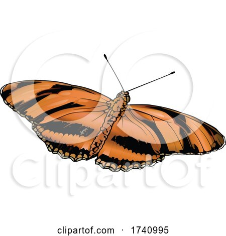 Dryadula Phaetusa Banded Orange Heliconian Butterfly by dero