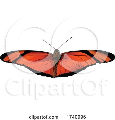 Dryas Iulia Julia Butterfly by dero