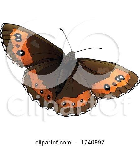Erebia Ligea Arran Brown Butterfly by dero