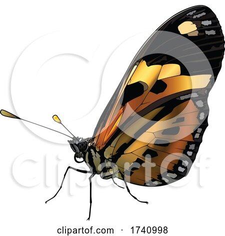 Eueides Isabella Butterfly by dero