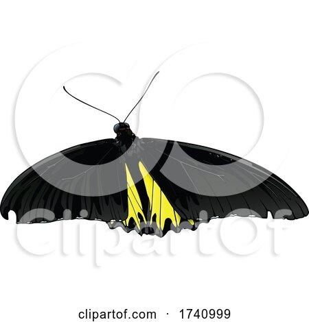 Golden Birdwing Golden Birdwing Butterfly by dero