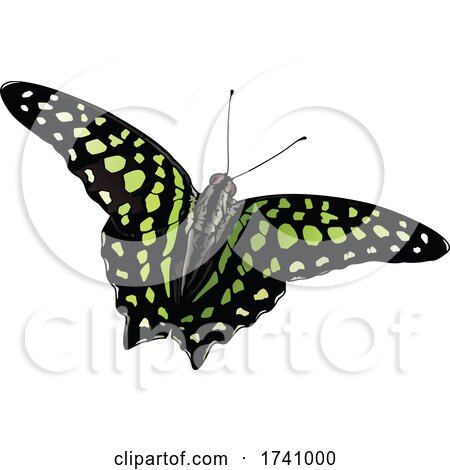 Graphium Agamemnon Tailed Jay Butterfly by dero