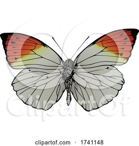 Hebomoia Glaucippe Great Orange Tip Butterfly by dero