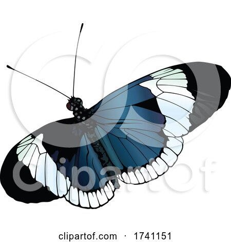 Heliconius Sapho Butterfly by dero