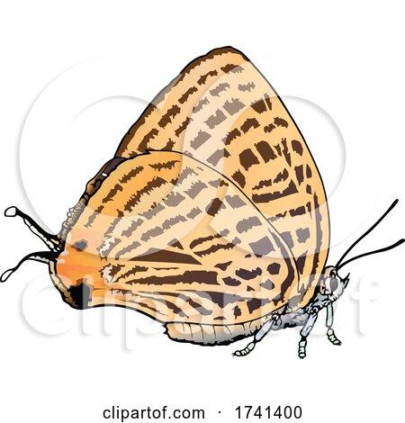 Japonica Saepestriata Butterfly by dero