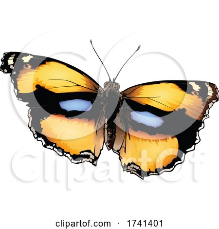 Junonia Hierta Yellow Pansy Butterfly by dero