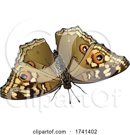 Junonia Lemonias Lemon Pansy Butterfly by dero