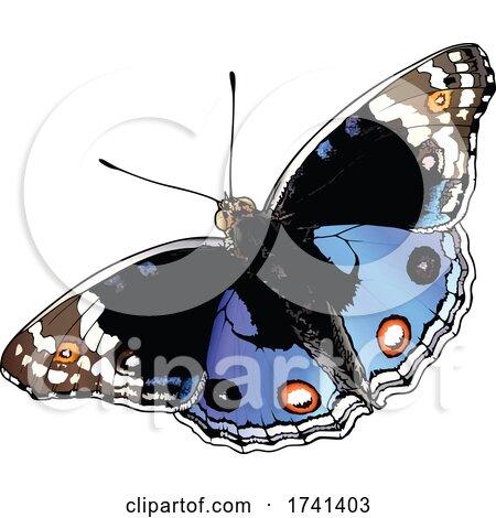 Junonia Orithya Butterfly by dero
