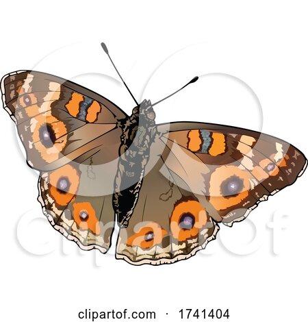 Junonia Villida Butterfly by dero