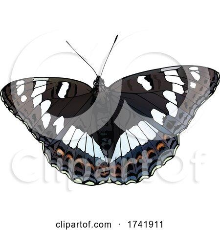 Limenitis Populi Poplar Admiral Butterfly by dero