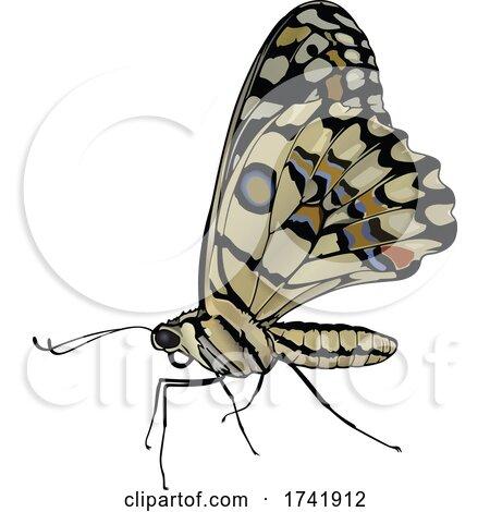Papilio Demoleus Butterfly by dero