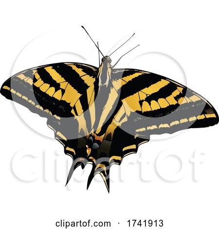 Papilio Pilumnus Butterfly by dero