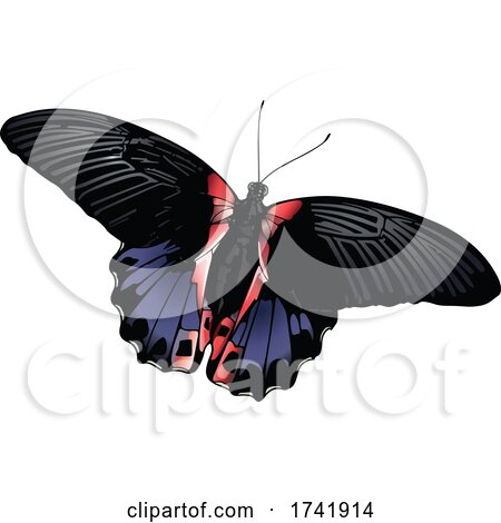 Papilio Rumanzovia Butterfly by dero