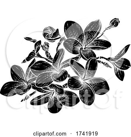 Tropical Plumeria Frangipani Bali Flower Woodcut by AtStockIllustration