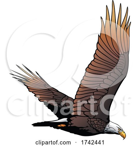 Bald Eagle by dero