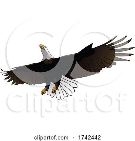 Bald Eagle by dero