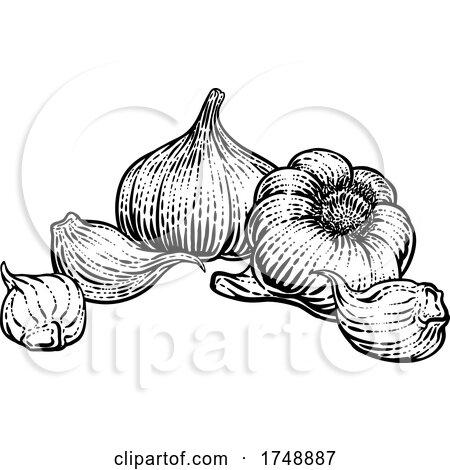 Garlic by AtStockIllustration