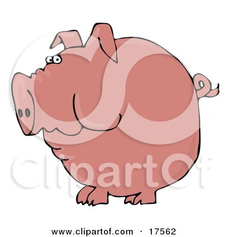 Clipart Illustration of a Fat Pink Pig With A Curly Tail Holding Food In His Cheeks by djart