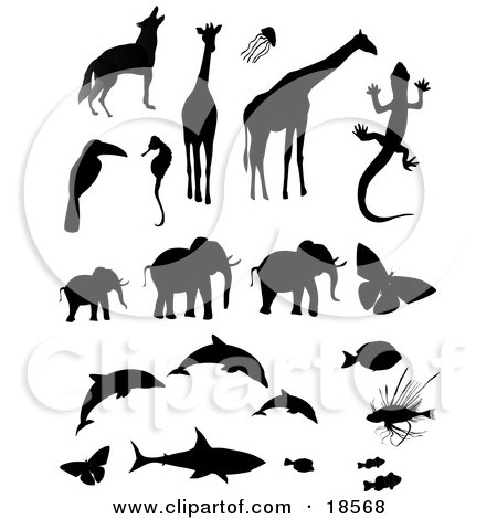 Clipart Illustration of a Collection of Animal Silhouettes Including a Wolf or Coyote, Giraffes, Jellyfish, Toucan, Seahorse, Gecko, Elephants, Butterflies, Dolphins, Triggerfish, Lionfish, a Shark and Clownfishes by Rasmussen Images