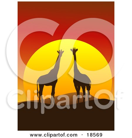 Giraffe Pair Silhouetted on a Hilly African Landscape in Front of a Big Red Sunset Posters, Art Prints
