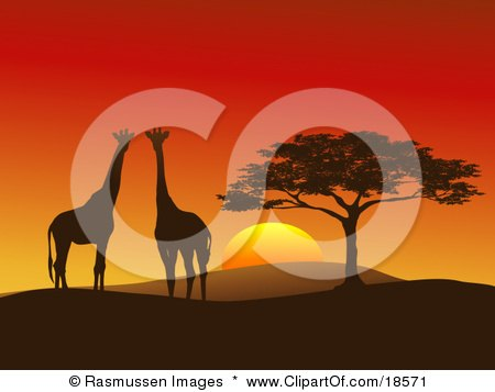 Clipart Illustration of a Giraffe Pair Silhouetted On A Hilly African Landscape Near A Tree In Front Of A Big Red Sunset On The Serengeti, Horizontal Composition by Rasmussen Images