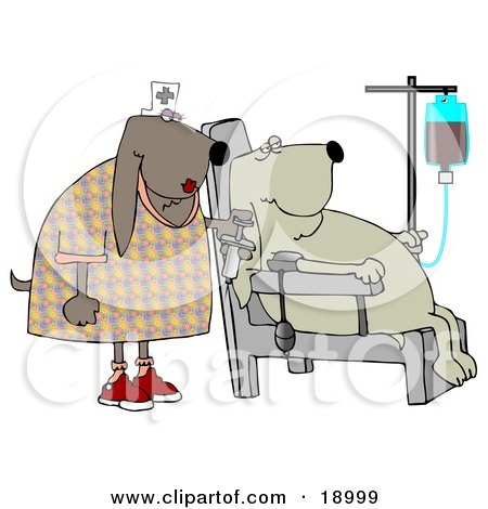 Clipart Illustration of a Male Bloodhounds Seated In A Chair, Donating Blood While A Nurse Stands By by djart