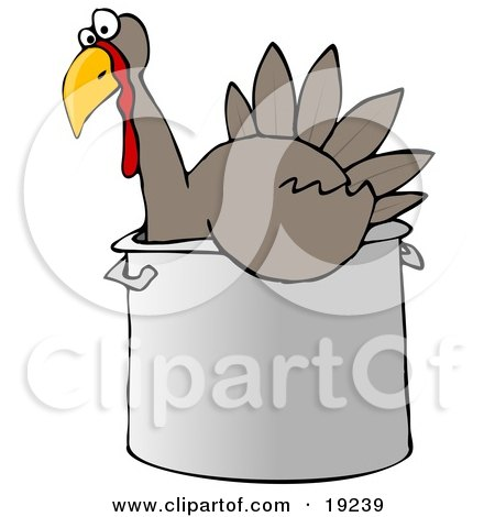 Confused Live Turkey Bird In A Big Pot, Being Prepared For Thanksgiving Dinner Posters, Art Prints