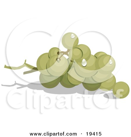 Clipart Illustration of a Group Of Ripe And Whole Green Grapes In A Bunch On The Vine by Vitmary Rodriguez