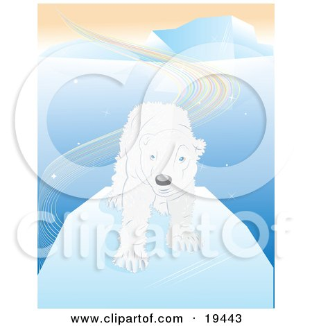 Shaggy And Wet White Polar Bear With Blue Eyes, Standing On An Iceberg After Swimming In The Arctic Waters Posters, Art Prints