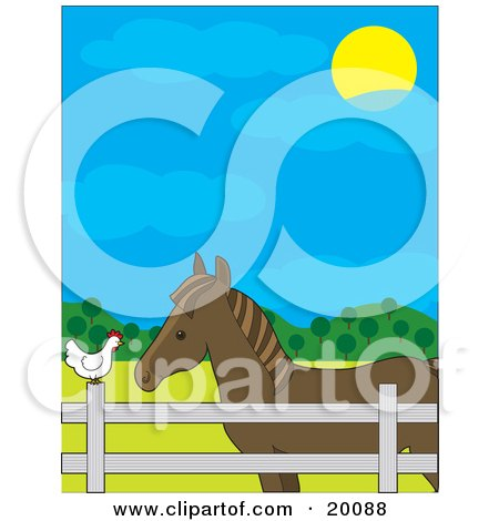 Brown Horse In A Fenced Pasture, Talking To A White Hen On A Farm On A Sunny Day Posters, Art Prints
