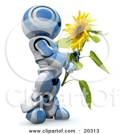 Clipart Illustration of a Daydreaming Blue And White AO-Maru Robot Carrying A Beautiful Yellow Sunflower, Over A White Background by Leo Blanchette