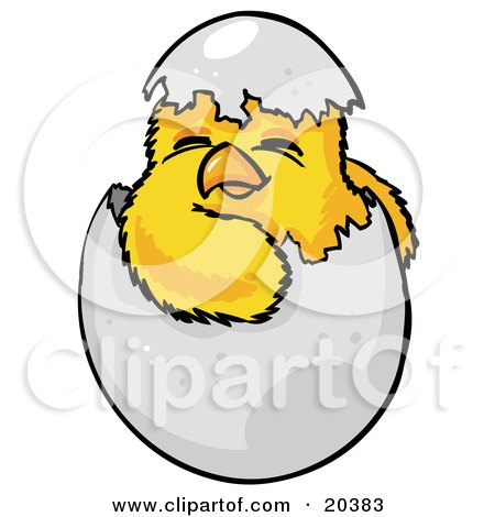 Clipart Illustration of a Cute Baby Yellow Chick Hatchling, Hatching Out Of A Cracked Chicken Egg On Easter by Tonis Pan