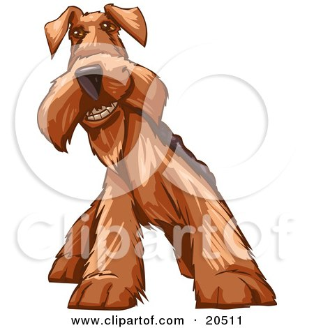 Clipart Illustration of a Social Airedale Terrier Dog Grinning At The Viewer by Tonis Pan