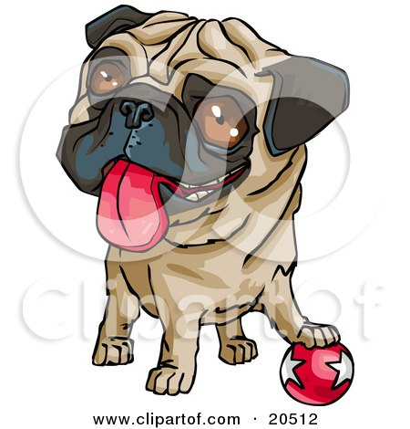 Cute Brown Eyed Pug Dog Hanging His Tongue Out And Looking Upwards While Resting His Paw Playfully On A Ball Posters, Art Prints