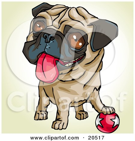 Clipart Illustration of a Playful Pug Dog With His Paw On A Ball, Hanging His Tongue Out by Tonis Pan