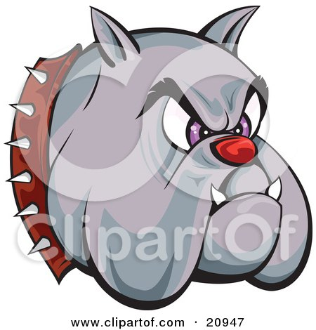 Clip Art Picture of a Tough Bulldogs Head With A Red Nose, Purple Eyes, Fangs And A Spiked Collar, Over A White Background by Paulo Resende