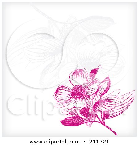 Royalty-Free (RF) Clipart Illustration of a Pink Dogwood Flower Blossom Background With Faint Flowers On White by Eugene
