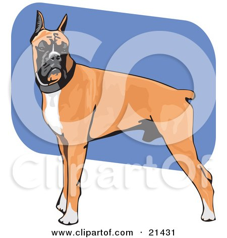 Clipart Illustration of a Muscular Brown, White And Black Boxer Dog Standing With His Body In Profile, His Head Facing Front by David Rey