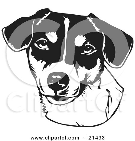 Clipart Illustration of The Face Of A Friendly Jack Russell Terrier Dog Over A White Background by David Rey